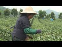 Role of Agriculture in China