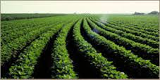 Agronomy Science