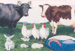 Animal Husbandry Management