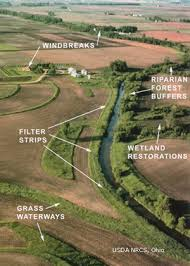 Buffer Strip