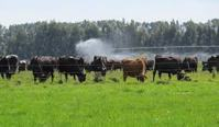Dairy Farm Investment
