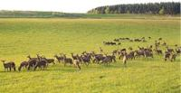About Deer Farming