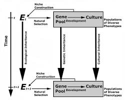 Dual Inheritance Theory
