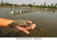 Freshwater Shrimp Farming