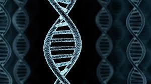 Genetic Determinism