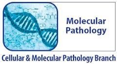 Molecular Pathological Epidemiology