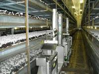 Modern Mushroom Farms