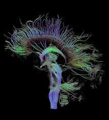 Neurolinguistics Definition