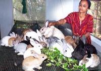 Introduction to Rabbit Farming