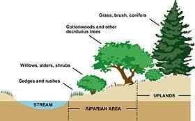 Riparian Buffer