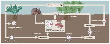 Soil Ecology