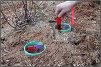 Weed Management of Blueberries