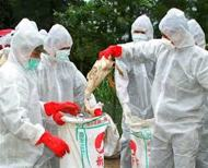 History of the Bird Flu