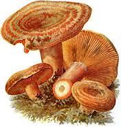 Russulaceae