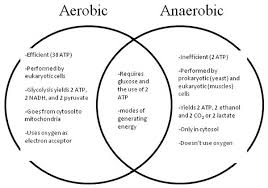 Aerobic Exercise Process
