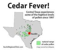 Cedar Fever