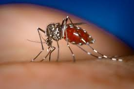 Dengue Fever