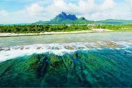 Sea Vegetation