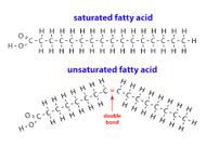 Fatty Acids