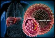 About Hepatitis