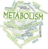 About Metabolism