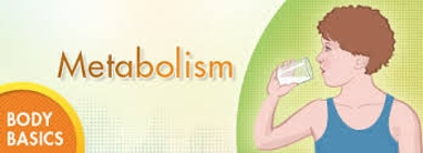 Know about Metabolism