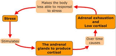 Adrenal Exhaustion