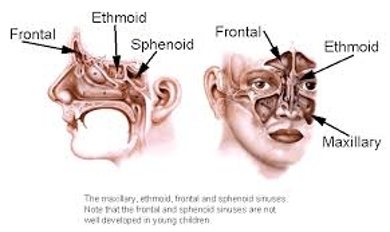 Ethmoid Sinus