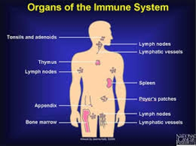 Discuss on Immune System