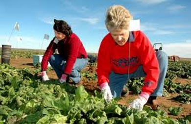 About Agricultural Jobs
