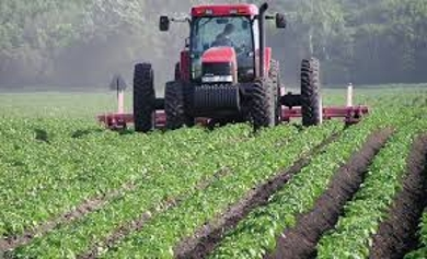 Important of Agriculture