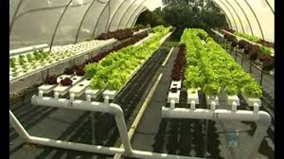 Define on Aquaponic Farming