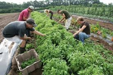 About Organic Farming Methods