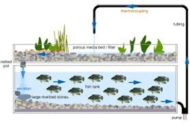 About Aquaponics System