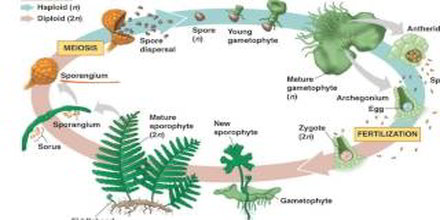 Biological Life Cycle