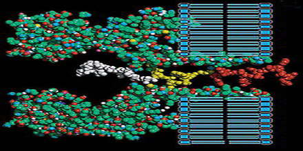 Biomolecular Engineering