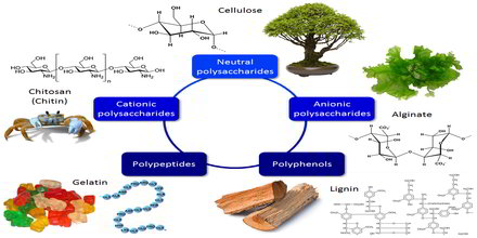 Biopolymer Definition