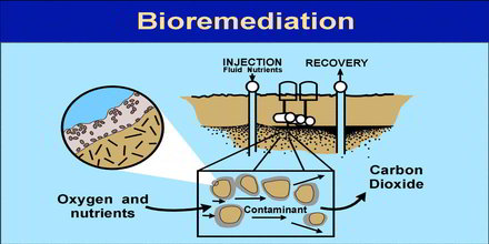 Bioremediation Definition