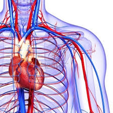 About Blood Circulation