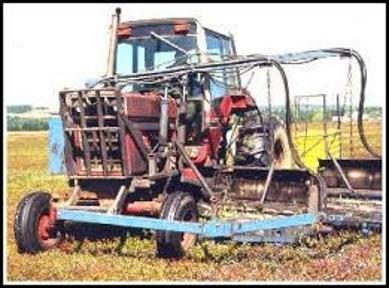 Blueberry Harvesting