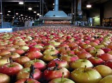Fruit Storage Industry