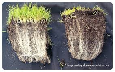 Know about Mycorrhizae
