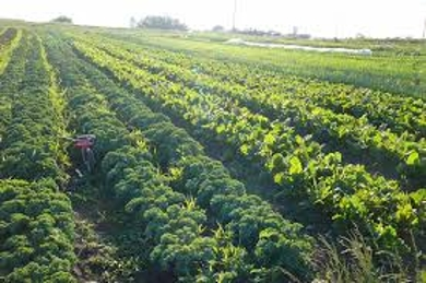 About Organic Vegetable Farming