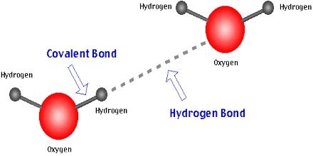 Hydrogen Bond Assignment Point