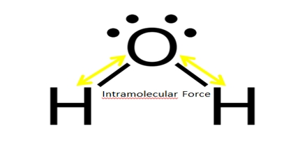 Intramolecular Force