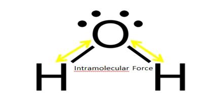 Intramolecular Force