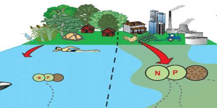 Nutrient Pollution Definition