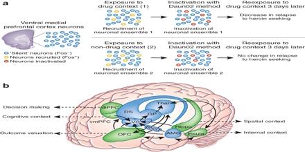 Neural Ensemble