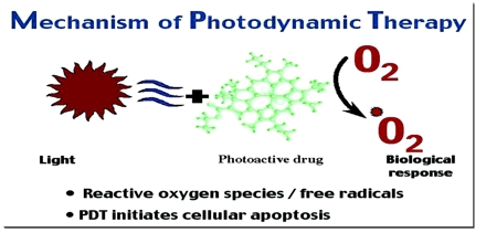 Photodynamic Therapy Assignment Point