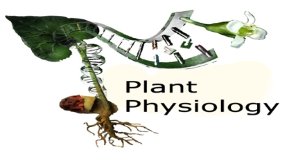 Plant Physiology Biology